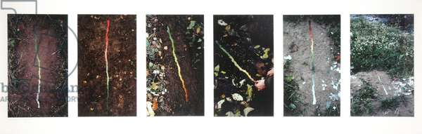 Lines to follow Colour Changes in Coltsfoot Leaves, 1982-3 (cibachrome photos)