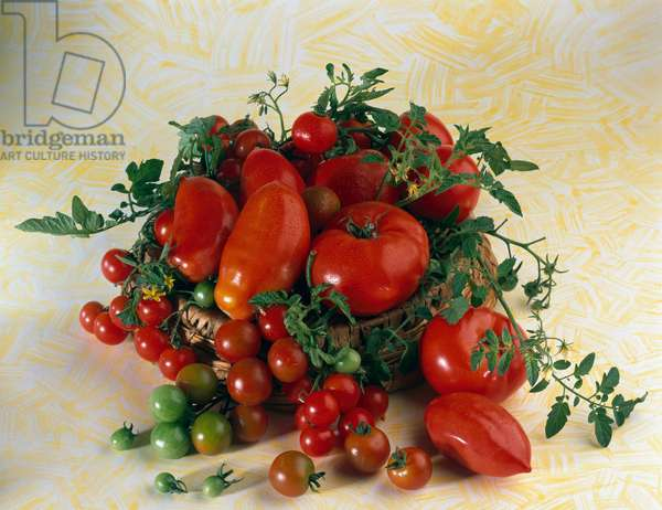 Still life with tomatoes, elongates, cherry, bunch and green tomatoes - (Still life with tomatoes, San Marzano, cherry tomatoes, Roma and green tomatoes)
