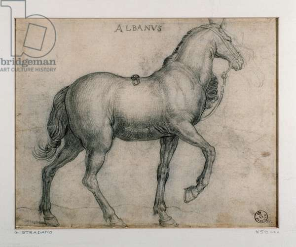 Study for a horse Drawing by Giovanni Stradano (Jan van der Straet) (1523-1605) Florence, Gabinetto Disegni e Stampe, Uffizi (Offices)
