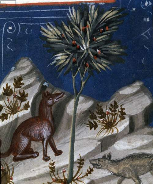 Fox and a wolf, illustration from 'Codex Justianus', 1350 (vellum)