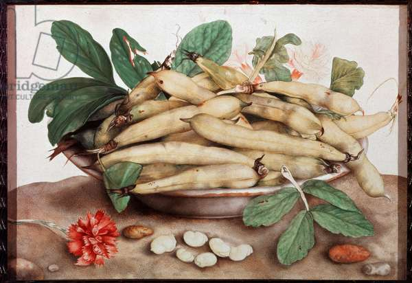 Still Life with Bean Plate Painting by Giovanna Garzoni (1600-1670) 17th century Florence. Palazzo Pitti.