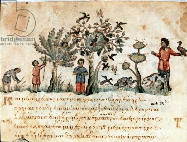 "Hunting scene with hawks and collection of fruits Miniature taken from the hunting milking """" The Cynegetics"""" by Oppian (Oppian or Oppianus) of Syria (3rd century AD) dedicated to Caracalla. 11th century Venice. Biblioteca Marciana"
