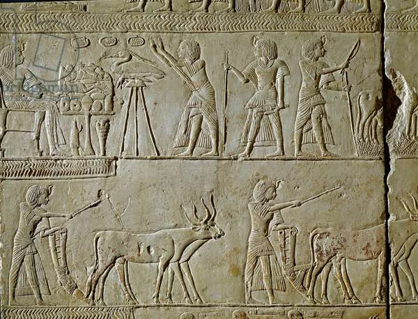 Egyptian antiquite: scenes of work in the fields and offerings to the pharaoh. Detail of a relief from the tomb of Horemhed (circa 1323-1293 BC) royal scribe of Tutankhamun. 1354-1326 BC. Bologna, Civico Museo Archeologico
