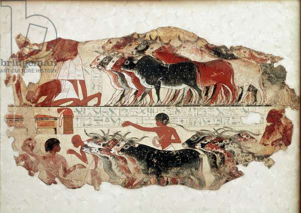 Egyptian antiquite: scenes of daily life, betail and animal inspection. Paintings on stucco from the tomb of the noble Nebamon. 18th dynasty. Around 1290-1224 BC. Thebes, Egypt. British Museum, London