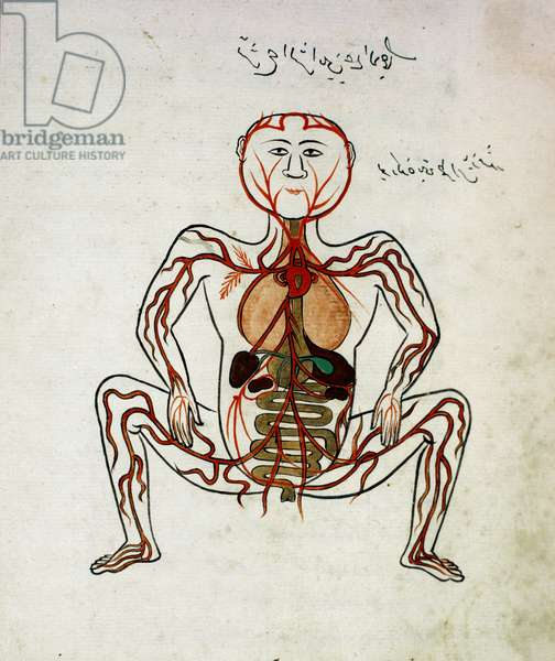 "Arabic medicine: """" blood circulation and digestive system"""" Miniature of the anatomy manuscript """" Tashrih bi al-Taswir"""" (Anatomy of the body) by Mansur (Mansur) ibn Ilyas (circa 1390) 17th century Istanbul, university library"