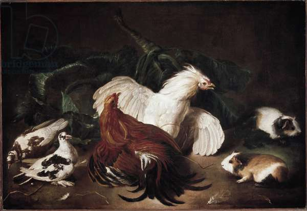 Still life with animals Hens and Hamsters - Painting by Giovanni Agostino Cassana (1658-1720) Private collection