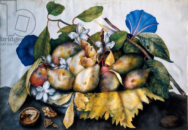 Plate of plums, jasmine and nuts Painting on parchment by Giovanna Garzoni (1600-1670), 17th century. Dim. 23,5x38.5 cm Florence, Galleria Palatina