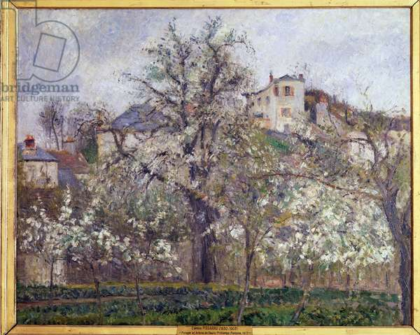 Vegetable garden and flowering trees in Pontoise (Spring, plum blossoms in Pontoise) Painting by Camille Pissarro (1830-1903) 1877 Dim 65x81 cm Paris musee d'Orsay