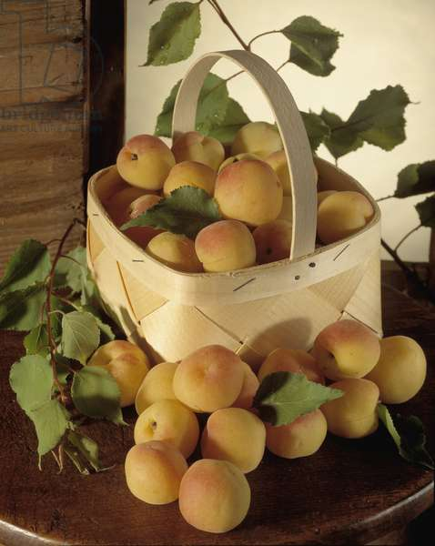 Food: basket of apricots.