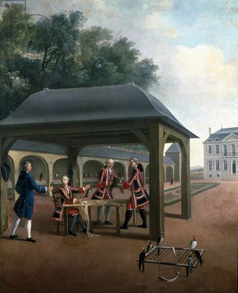 Falconry breeding falcons for hunting. Painting of the French school of the 18th century. Versailles, castle museum