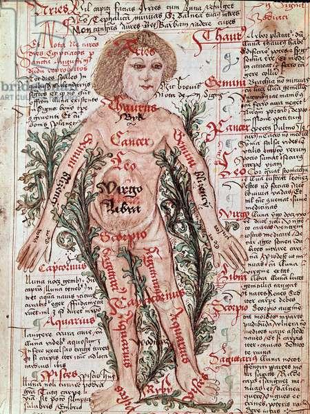 Medicine: influence of the zodiac on human diseases (Miniature, 15th century)