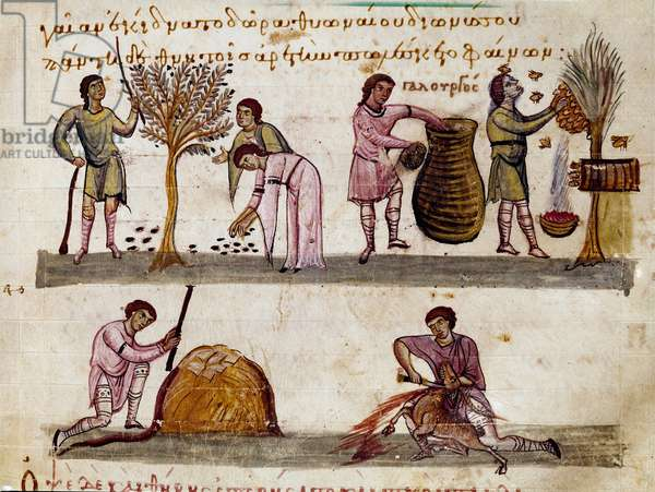 """The harvest of olives, the production of honey and the lamb slaughters Miniature from the hunting milking """""""" The Cynegetics"""""""" by Oppian (Oppian or Oppianus) of Syria (3rd century AD) dedicated to Caracalla. 11th century Venice. Biblioteca Marciana"""