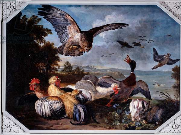 Birds frightened by an eagle Painting by David de Koninck or Coninck (1642/1646-1701/1705) Genes, Galleria di Palazzo Reale