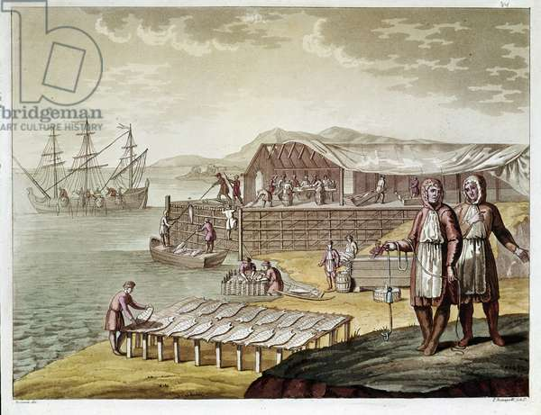 Fishing and drying cod in Newfoundland. (Engraving, 1575)