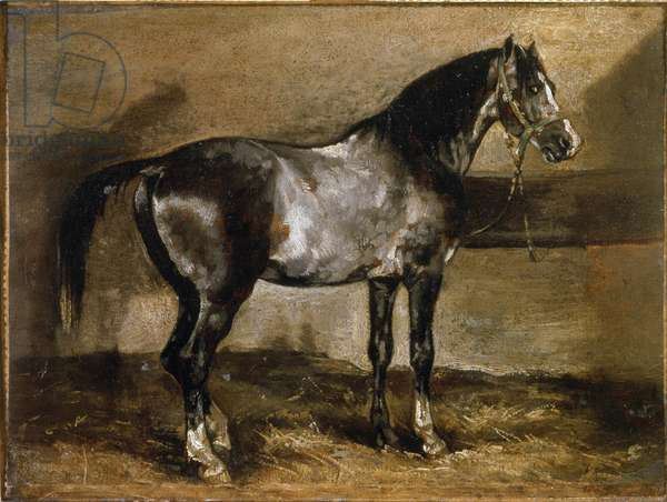 Grey Horse at the Ratelier - oil on canvvas, 19th century