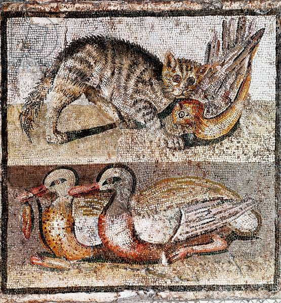 Roman Art: mosaic depicting a wild cat catching a partridge and two ducks. 200-150 BC. Rome, Museo Nazionale Romano - Roman art: mosaic depicting a wild cat catching a partridge and two ducks. 200-150 BC. Museo Nazionale Romano, Rome, Italy
