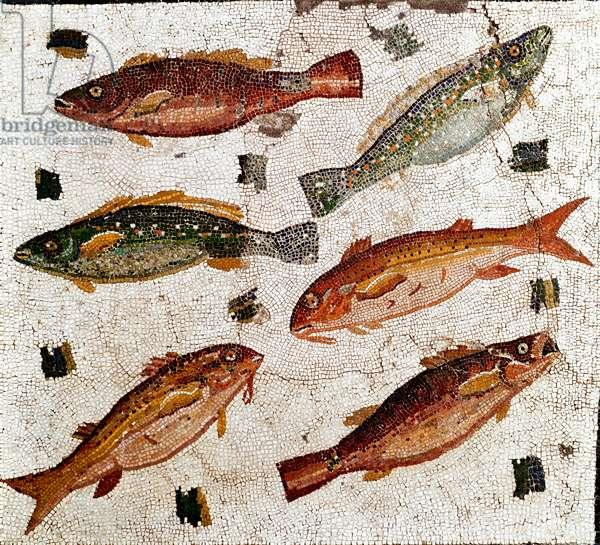 Roman art: mosaic representing fish. 1st century BC. Rome, Museo Nazionale Romano - Roman art: Mosaic depicting fishes. 1st century BC. Museo Nazionale Romano, Rome, Italy