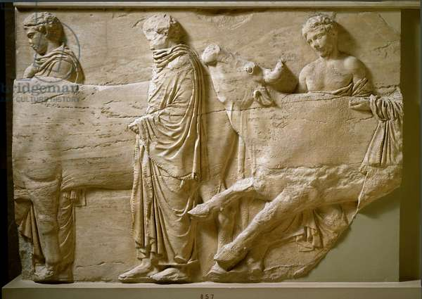 """Greek antiquite: """""""" young men guiding the oxen to the place of sacrifice"""""""""""" sculpted group of marble from the northern frieze of the Parthenon on the acropolis of Athenes. 442-438 BC. Athenes, Acropolis Museum"""