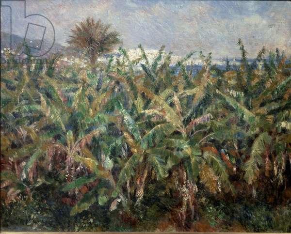 Banana Field, 1881 - Oil on canvas