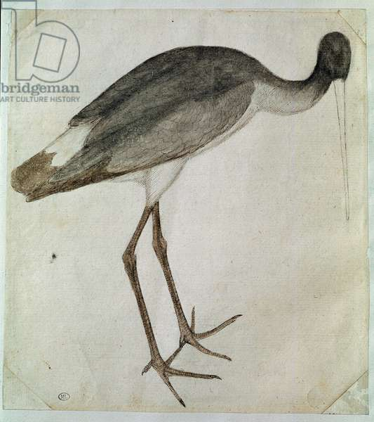 A black stork standing, facing to the right, 15th century (ink and wash drawing)