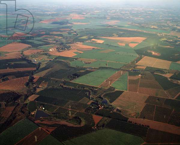 Aerial view of farmlands with coffee and sugar plantations near Limeira in Sao Paulo state, Brazil - Aerial view of farmlands with coffee and sugar plantations near Limeira in Sao Paulo state, Brazil - Photography - 1983