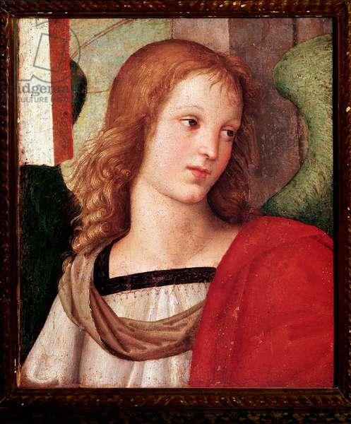 "Altarpiece by Nicola da Tolentino: ""Angel"""" (Angel) Painting by Raffaello Sanzio dit Raphael (1483-1520) 1500-1501 Dim 31x27 cm Brescia, Pinacoteca Tosio Martinengo"