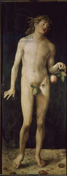 Adam Painting by Albrecht Durer (1471-1528) 1507 Dim 209x81 cm Madrid Prado Museum