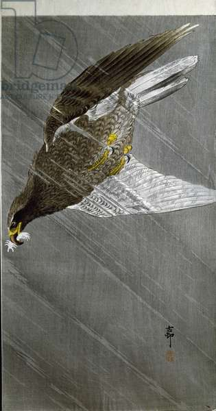 An eagle diving for it's prey, 1910 (colour woodcut)