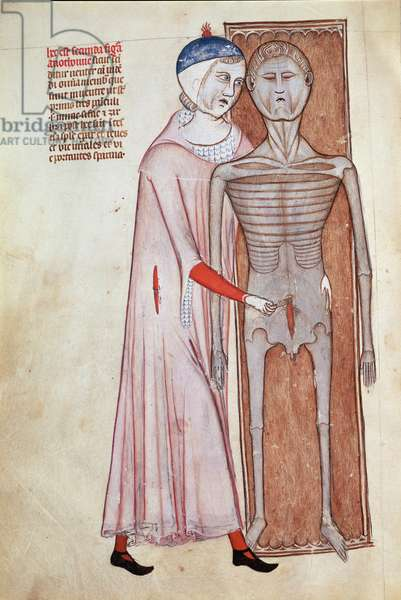 "Surgery: dissection of the thorax of a corpse by a medical doctor - Miniature in """" Liber notabilium Philippi septimi francorum regis, a libris Galieni extractus"""""" written by Gui (Guy) of Pavia, 1345, Italy - Chantilly, musee Conde - History of medicine: surgery, Dissection from the abdomen of a cadaver - Miniature from Philippi septimi notabilium francorum regis, a libris Galieni extractus ', by Guy of Pavia, 1345, Italy - Conde Museum, chantilly (France)"