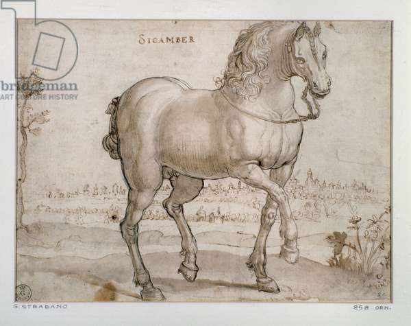 Study for a sicamber horse Drawing by Giovanni Stradano (Jan van der Straet) (1523-1605) Florence, Gabinetto Disegni e Stampe, Uffizi (Offices)