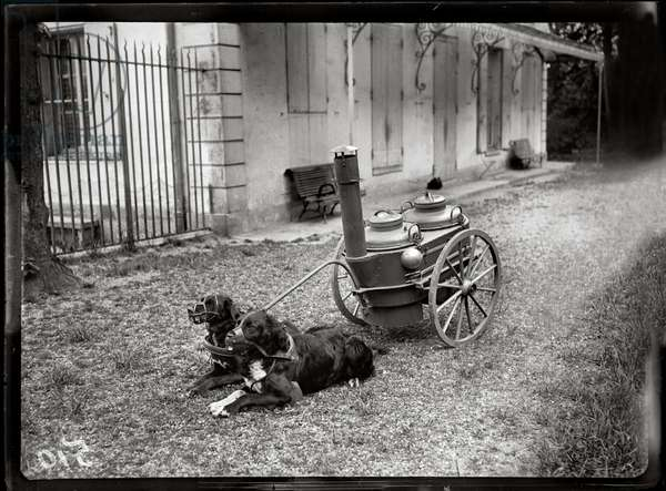 Dogs trained to carry portable stoves, 1915 (b/w photo)