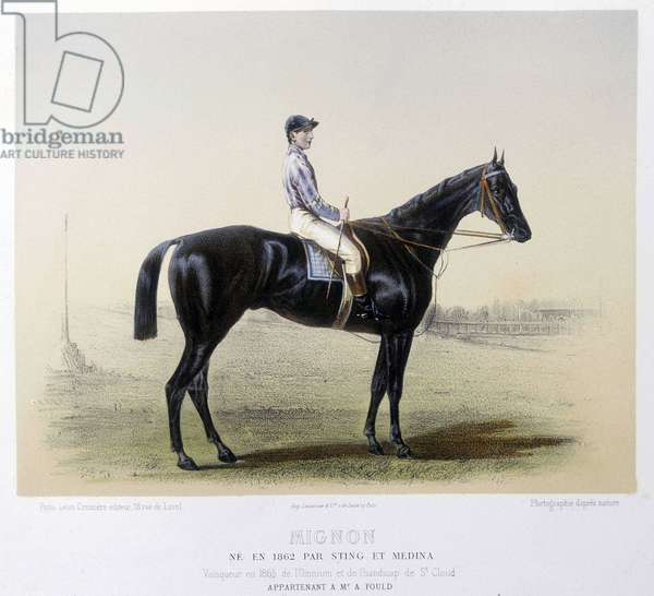 """Famous racing horse - in """""""" The Centaur"""""""" 1866"""