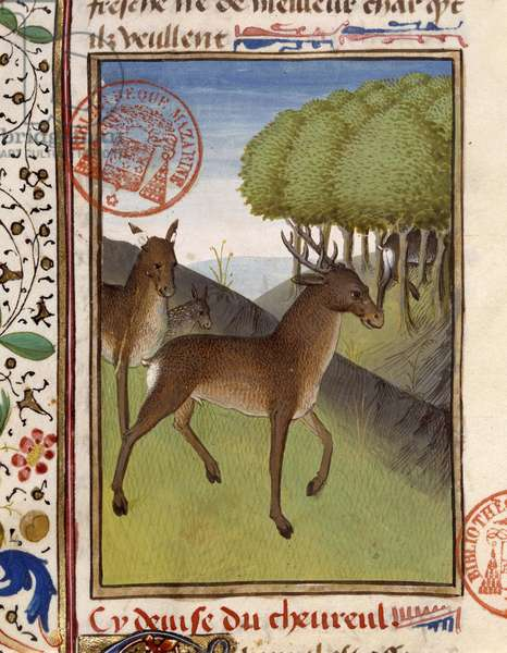 """Deer and deer - in """""""" The Hunting Book of Gaston Phoebus, Count of Foix, Lord of Béarn"""""""", 14th century"""