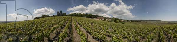 Vineyard in Champagne-Ardenne - Champagne Ardenne vineyard landscape, France - Tournerie (360 degrees panorama)