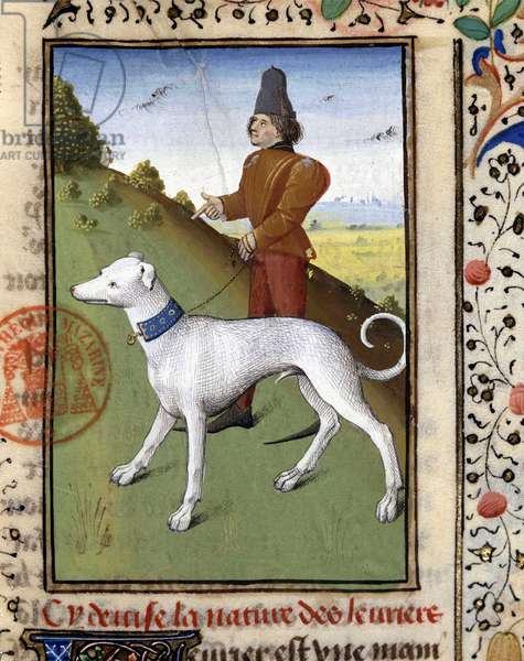 """Hunting dog held on a leash: greyhound - in """""""" Book of Hunting by Gaston Phoebus, Count of Foix, Lord of Béarn"""""""", 14th century"""
