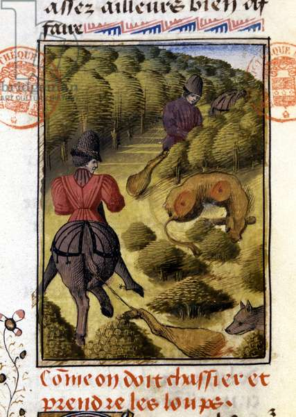 """Wolf Hunt- in """""""" Hunting Book of Gaston Phoebus, Count of Foix, Lord of Béarn"""""""", 14th century"""