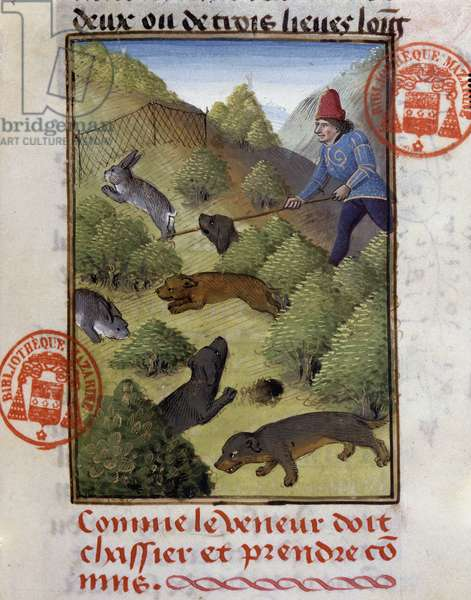 """Rabbit Hunt - in """""""" Hunting Book of Gaston Phoebus, Count of Foix, Lord of Béarn"""""""", 14th century"""