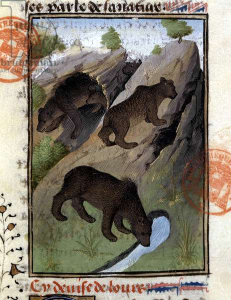 """The bear - in """""""" The Hunting Book of Gaston Phoebus, Count of Foix, Lord of Béarn"""""""", 14th century"""