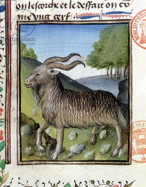 """Chasse - in """""""" Hunting Book of Gaston Phoebus, Count of Foix, Lord of Béarn"""""""", 14th century"""