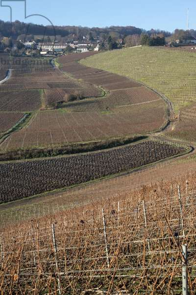 Vineyard in Champagne-Ardenne - France - Hautvilliers