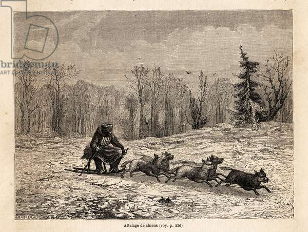 """A dog team, drawing by Eve Felinska, to illustrate his memories of exile in Siberia in 1839. Engraving in """""""" Le tour du monde"""""""", edited by Edouard Charton, 1862. Selva's collection."""