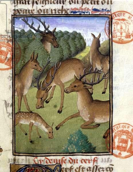 """Herd of deer, deer and suede - in """""""" The Hunting Book of Gaston Phoebus, Count of Foix, Lord of Béarn"""""""", 14th century."""