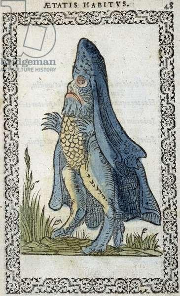 "L'enesque de mer - in """" Habits et effigies"""" by Jean Sluperius, 1572"