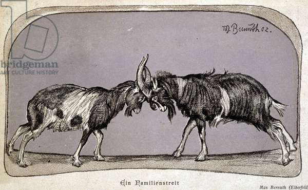 Battle of goats - drawing by Max Bernuth, 1902