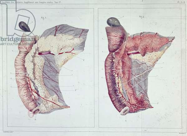 Memoir on the pancreas by Claude Bernard, B.N.