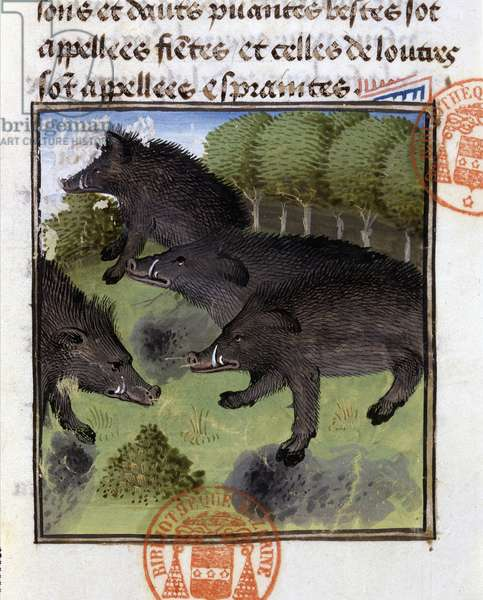 """Boars - in """""""" Hunting Book of Gaston Phoebus, Count of Foix, Lord of Béarn"""""""", 14th century"""
