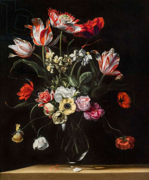 Tulips, Daffodils, Carnations, Poppies, Anemones, and Other Flowers in a Glass Vase on a Wooden Ledge, one of a pair, 17th century (oil on canvas) (see also 5888697)
