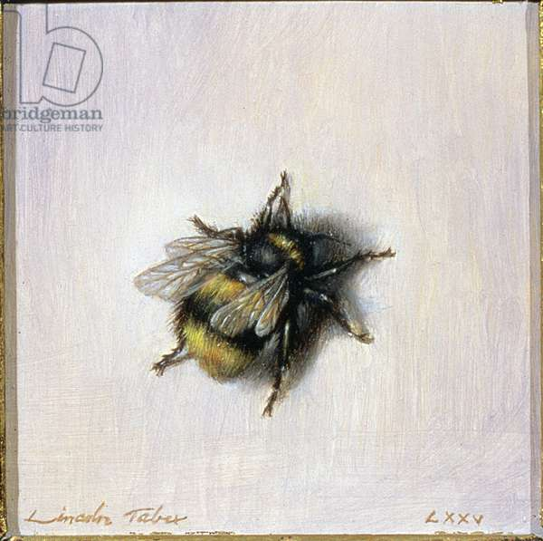Bumble Bee, 1976 (oil on board)