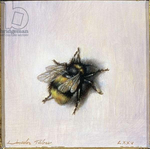 Bumble Bee, 1976 (oil on board)