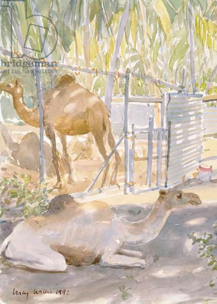 Camels at Rest, Salala (Oman) 1992 (w/c)